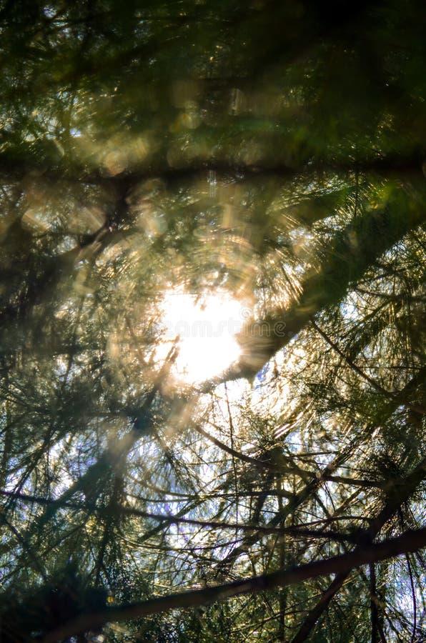 Słońce promienie Nad drzewami zdjęcia royalty free
