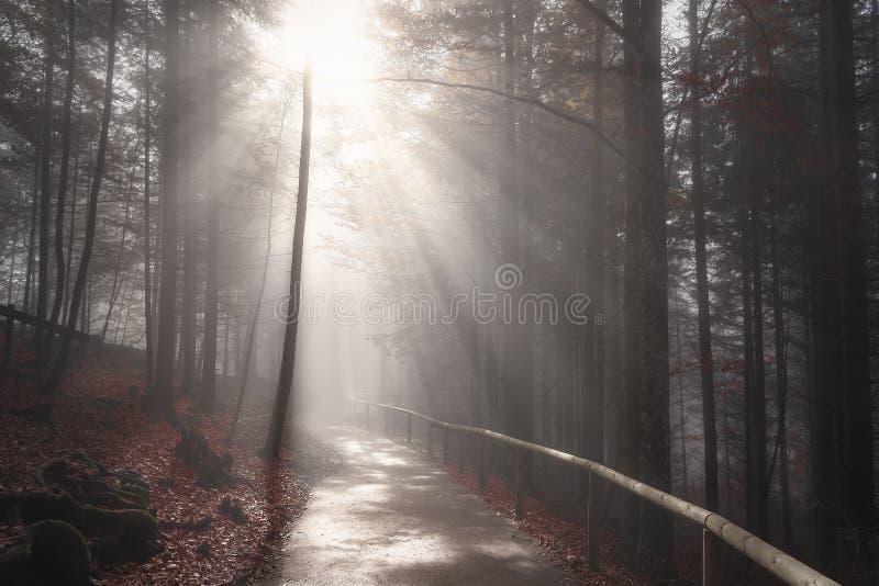 Słońce promienie nad lasową drogą w jesień wystroju obraz stock