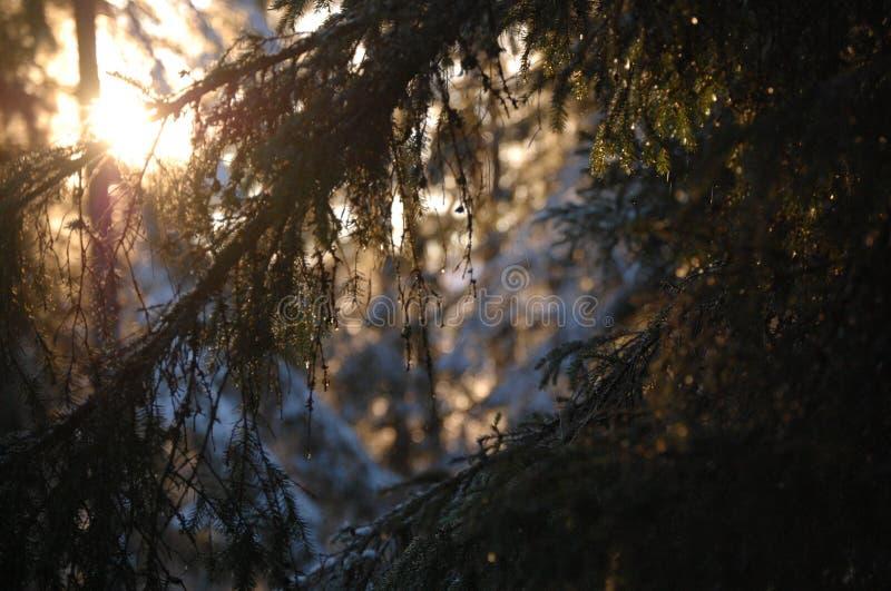 Słońce promienie od lasu obrazy royalty free