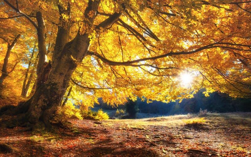 Słońce promienie przez jesieni drzew E fotografia stock