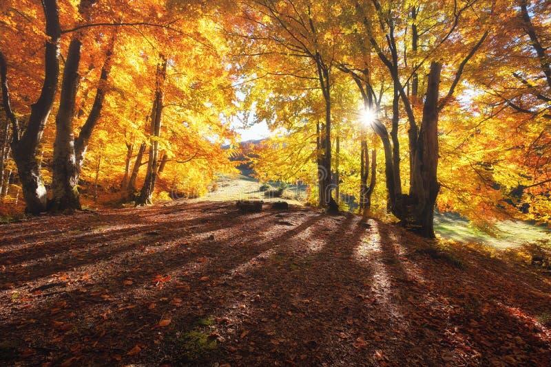 Słońce promienie przez jesieni drzew E obraz stock