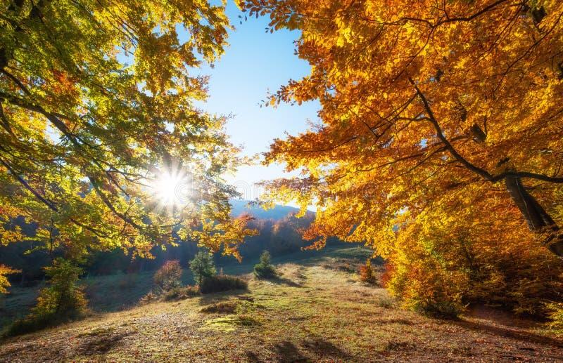 Słońce promienie przez jesieni drzew Naturalny jesień krajobraz w lasowym jesień lesie i słońce jako tło zdjęcia royalty free