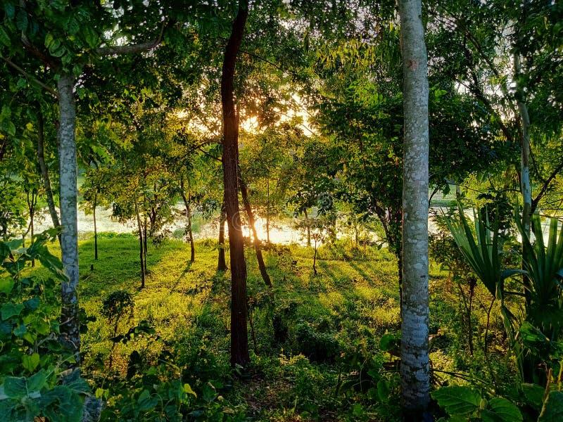 Słońce promienie przez lasu przy popołudniem obrazy stock
