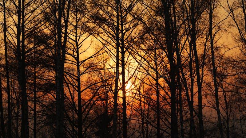 Słońce promienie przez mgły i drzew przy zmierzchem obraz stock