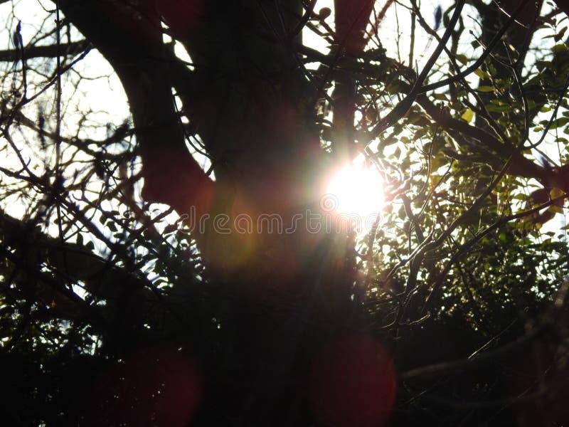 Słońce przez drzew obrazy stock