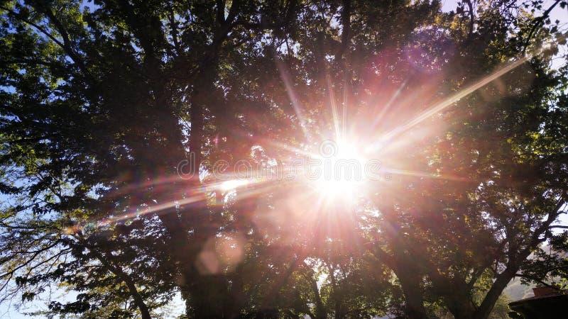 Słońce przez drzew fotografia royalty free