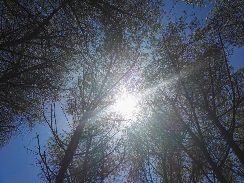 Słońce przez drzewo gałąź zdjęcie stock