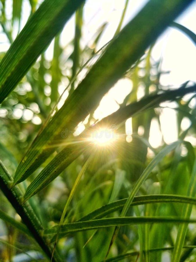 Słońce Ray& x27; s zdjęcie stock