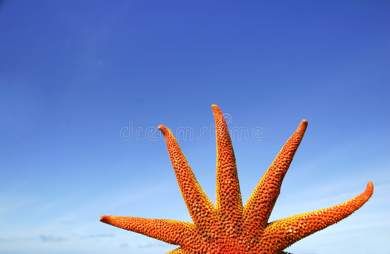 słońce rozgwiazdy zdjęcie royalty free