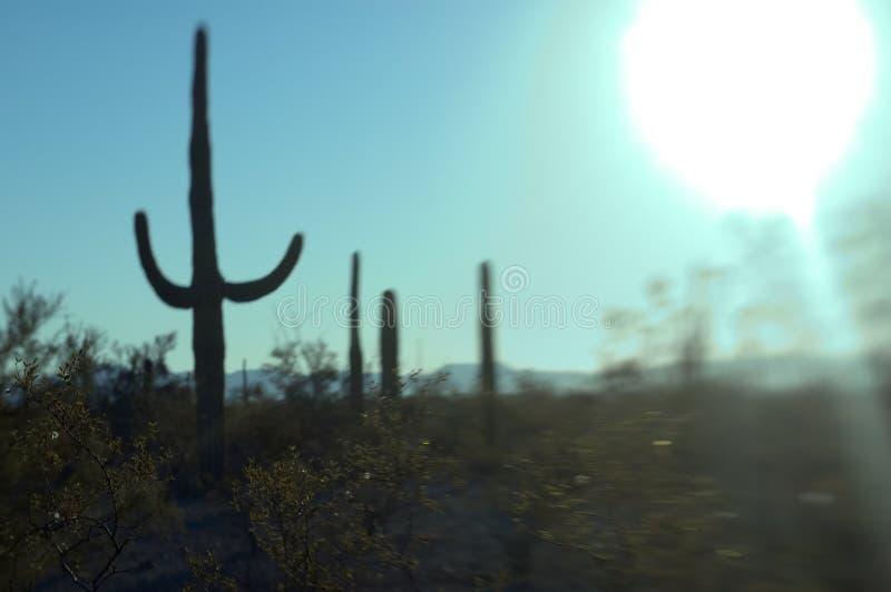 słońce sonoran obrazy stock