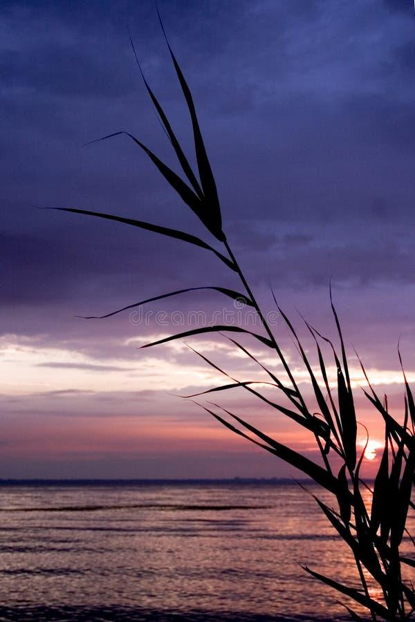 słońce uścisku fotografia stock