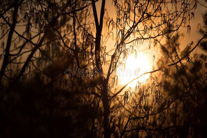 Słońce ustawia obrazy royalty free