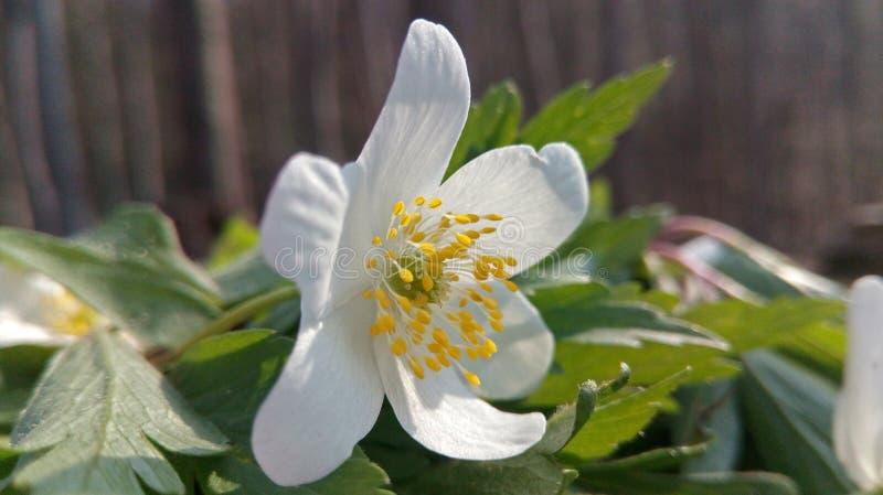 Słońce wśrodku kwiatu obrazy stock