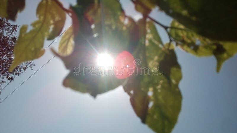 Słońce w liściu obrazy royalty free