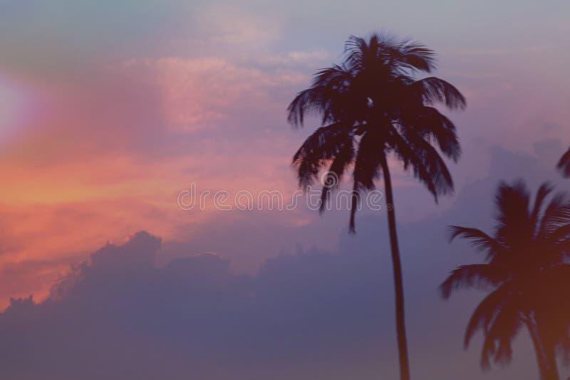 Słońce wzrost fotografia stock