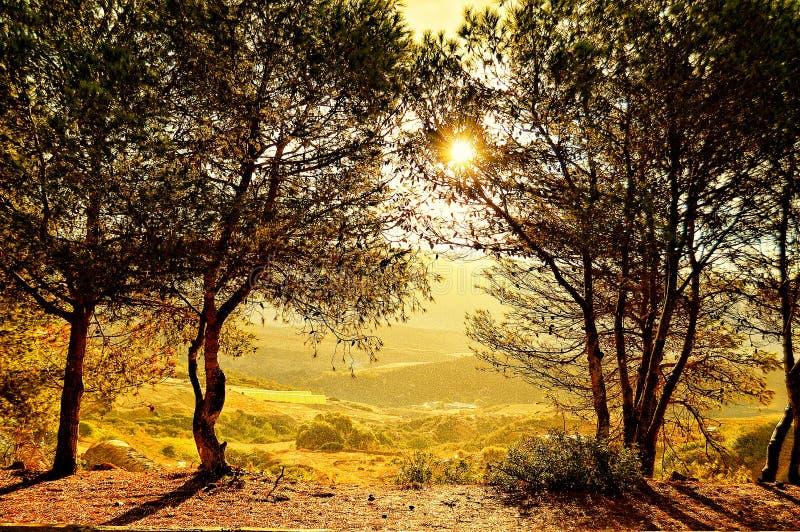 Słońce wzrost obrazy royalty free