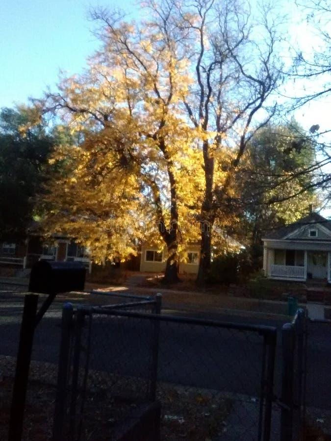 Słońce wzrosta fort Collins CO obrazy royalty free