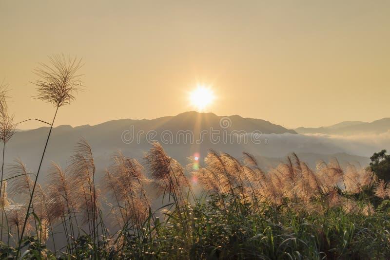 Słońce wzrosta krajobraz z Miscanthus przy przodem obraz royalty free
