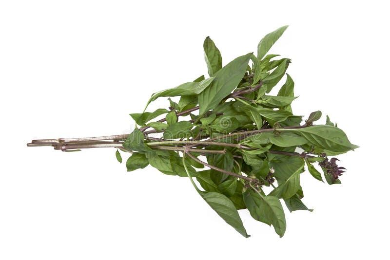 Słodcy Azjatyccy basilów liście na białym tle fotografia stock