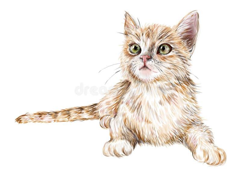 słodka imbirowa kotku ilustracja wektor