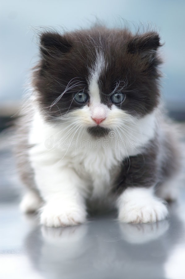 słodka kotku fotografia stock