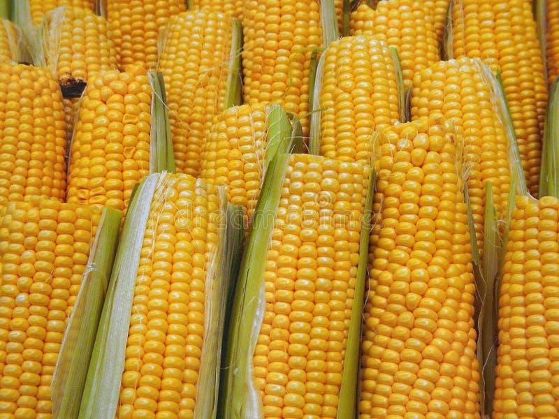 słodka kukurydza obraz stock