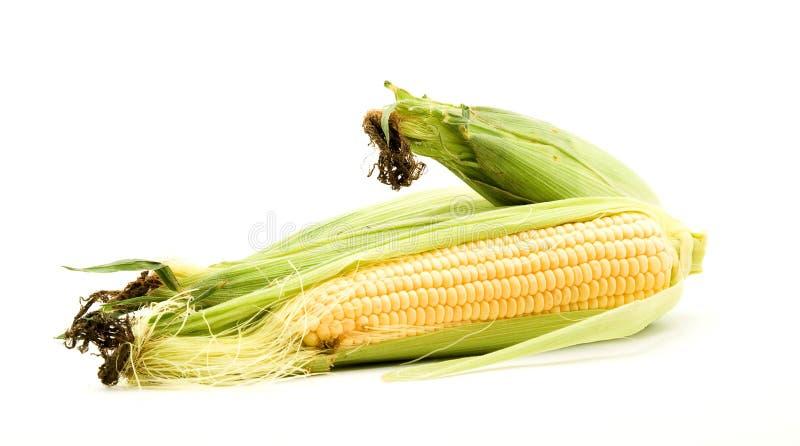 słodka kukurydza fotografia stock