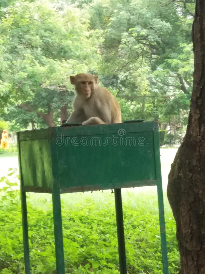 słodka małpka obraz royalty free
