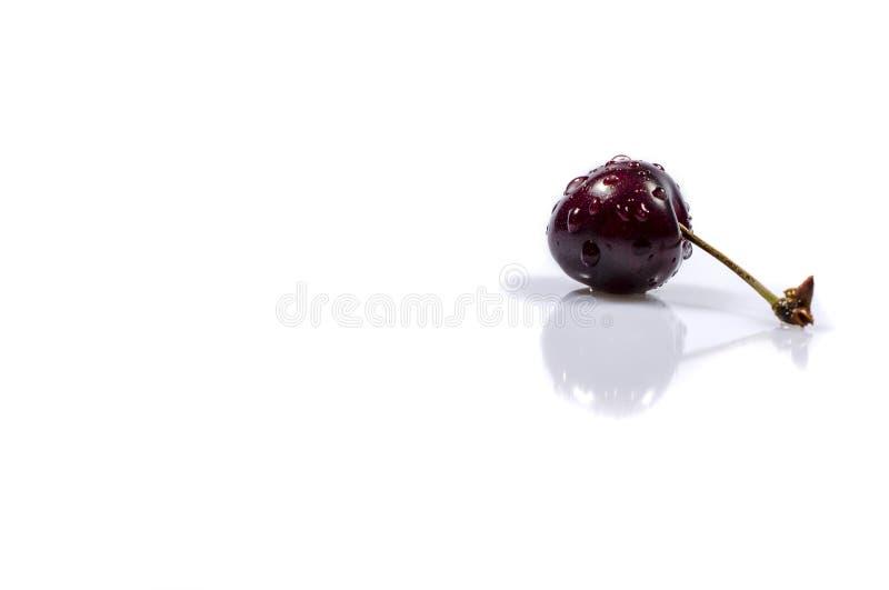Słodka wiśnia jest pod kropla deszczem zdjęcia stock