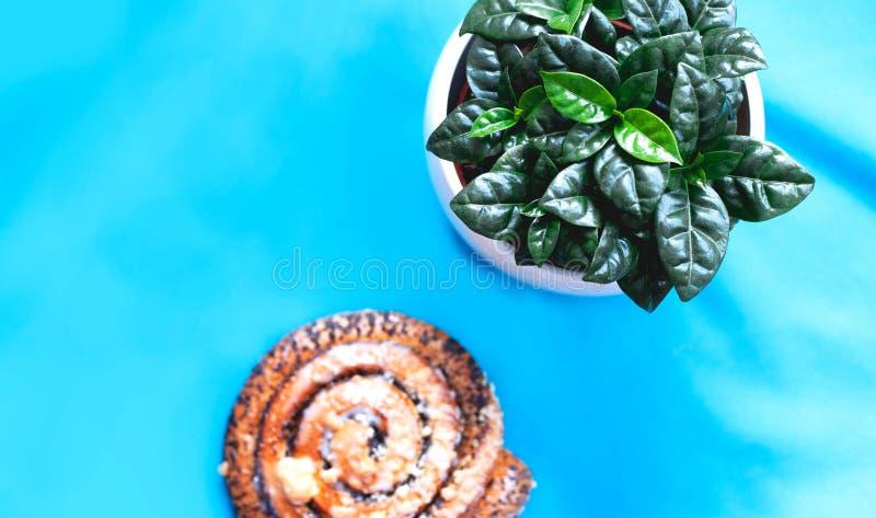 Słodki ciasta lying on the beach na stole obok kawowej rośliny Illustrative fotografia dla bloga o jedzeniu na przykład fotografia royalty free