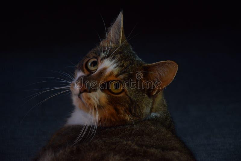 Słodki toughtful kot zdjęcie stock