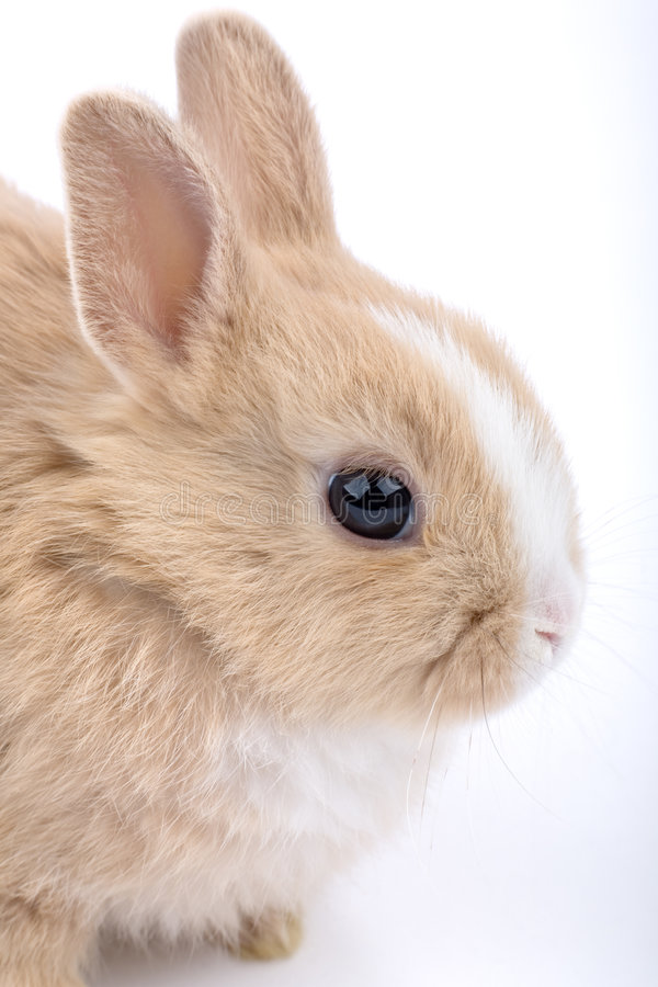 słodkie dziecko królika brown white zdjęcie royalty free