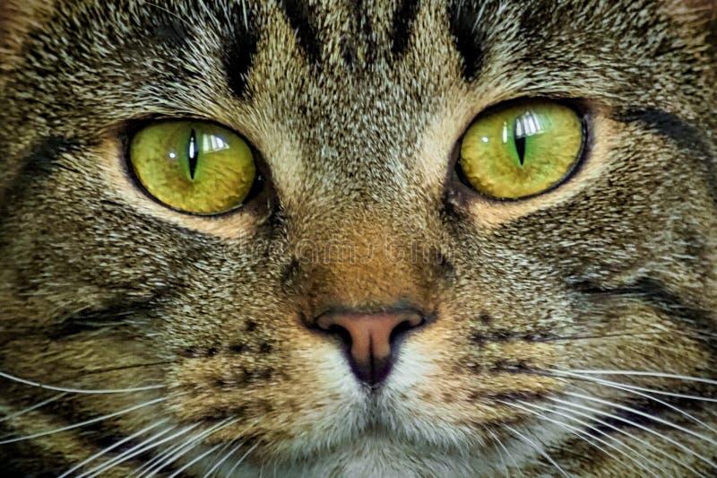 słodkie kota fotografia stock