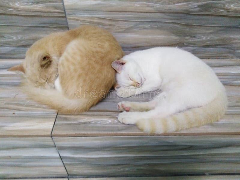 Słodkie koty śpiące razem obrazy stock