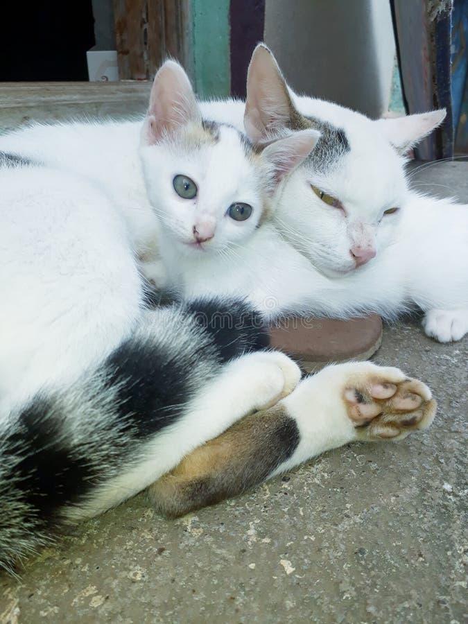 słodkie koty zdjęcie royalty free