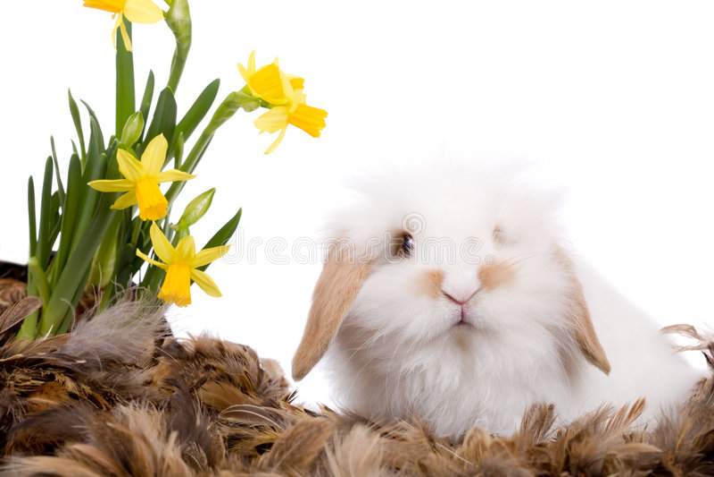 słodkie małe białe króliki fotografia royalty free