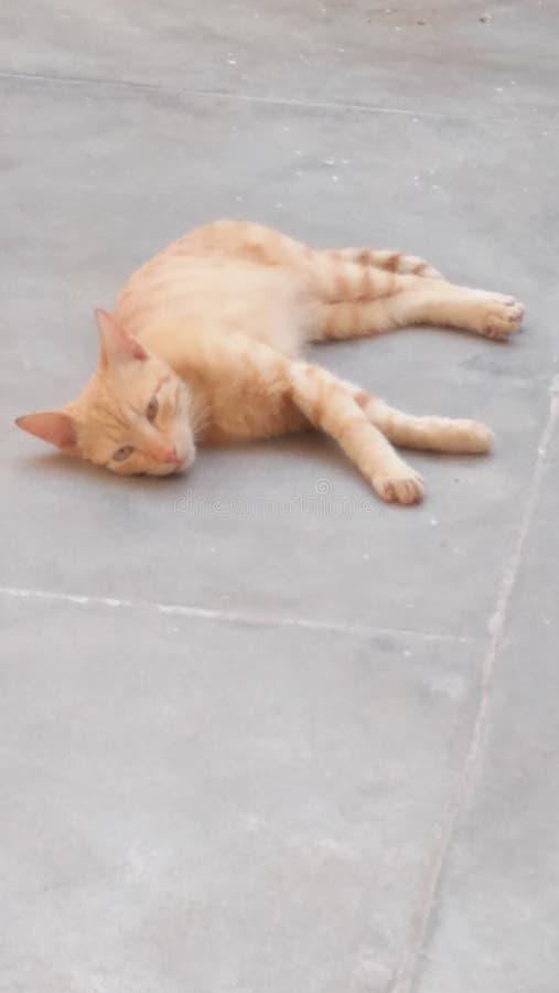 słodkie małe kota obraz royalty free