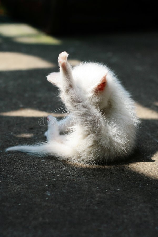 słodkie małe kota obraz stock