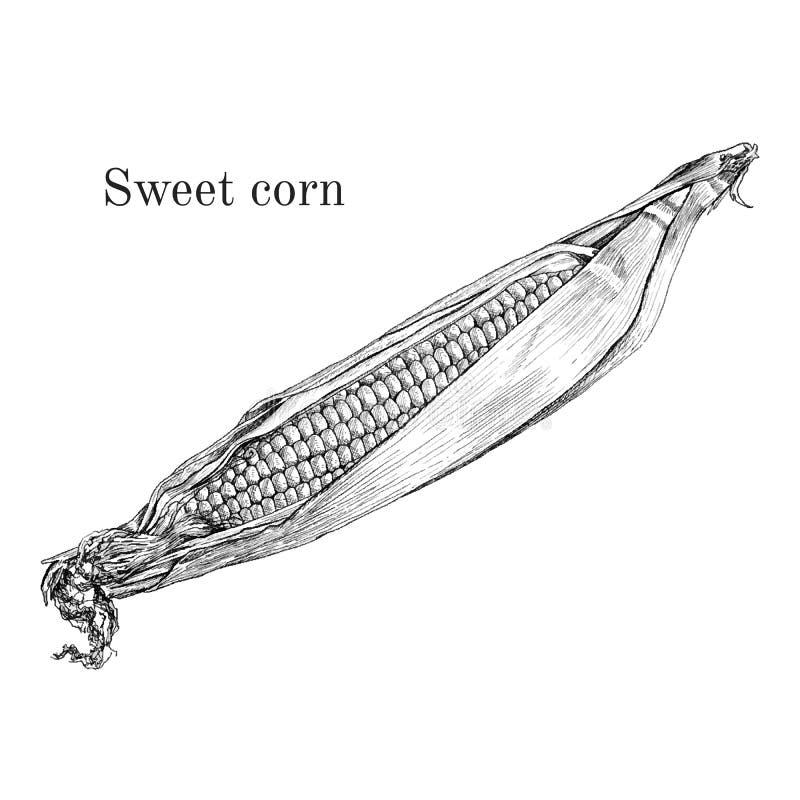 Słodkiej kukurudzy atramentu nakreślenie ilustracji