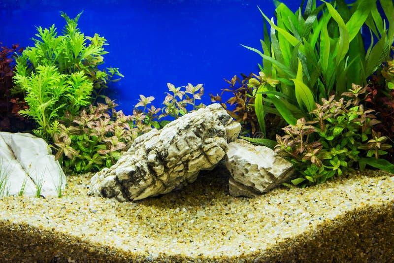 Słodkowodny akwarium zdjęcia stock