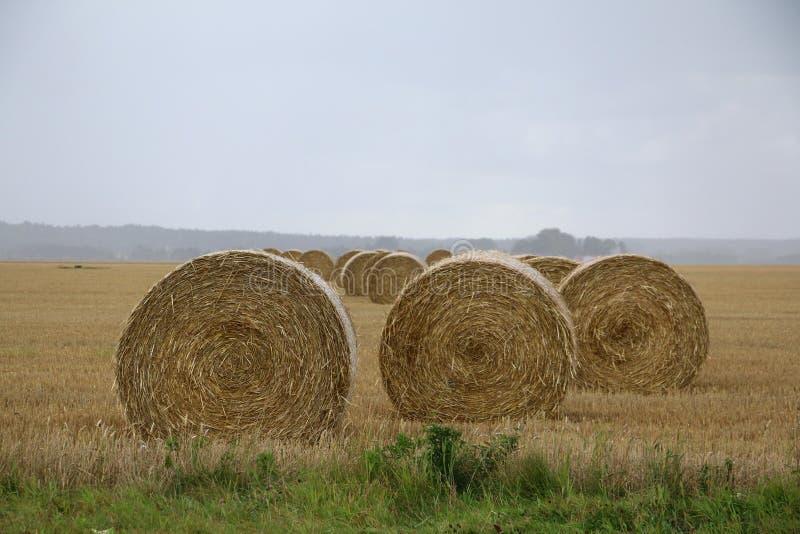 Słoma bele na polu w Szwecja dżdżysty jesień dzień fotografia stock