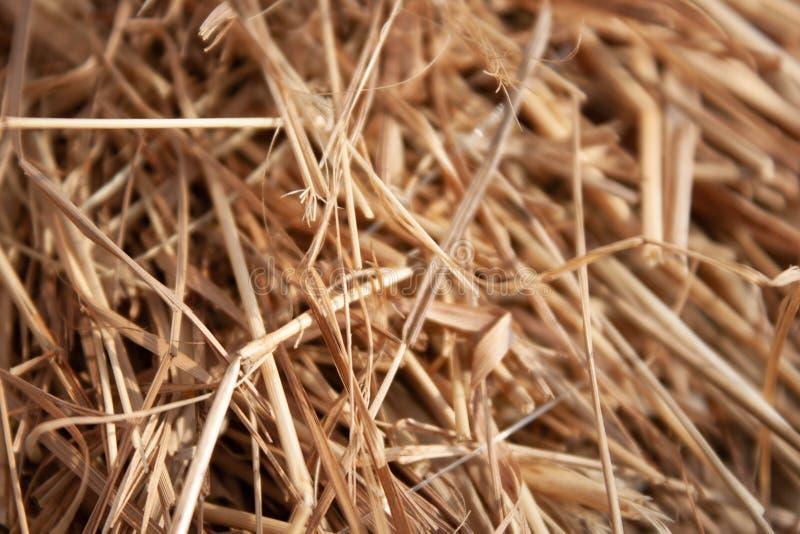 Słomiana siano beli tekstury tła fotografia zdjęcie royalty free