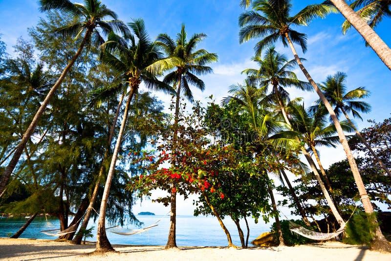 słomiane hamak palmy zdjęcia royalty free