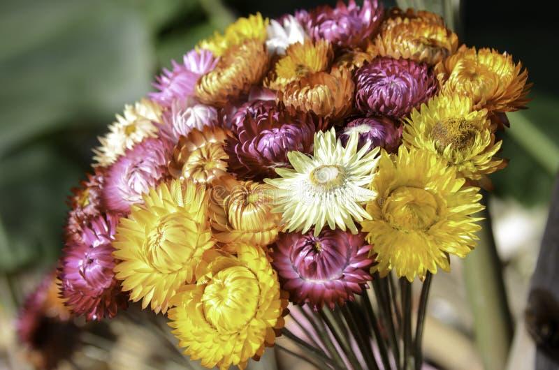 Słomiany kwiat lub papier stokrotka w Tajlandia zdjęcia royalty free