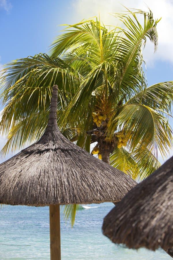 Słomiany sunshade pod drzewkiem palmowym obrazy royalty free