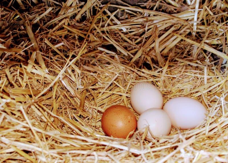 Słomy gniazdeczko z kurczaków jajkami zdjęcia stock