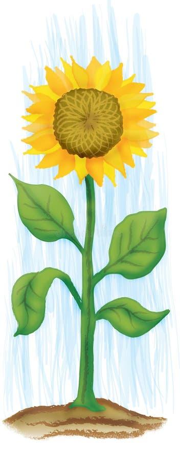 słonecznik royalty ilustracja