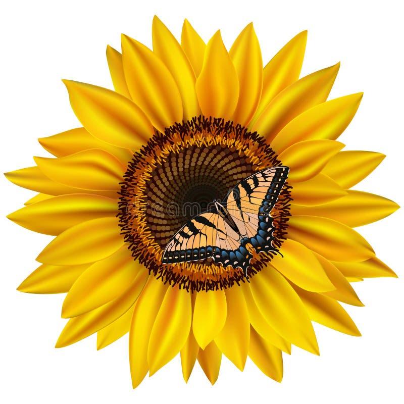 Słonecznik i swallowtail motyl ilustracja wektor