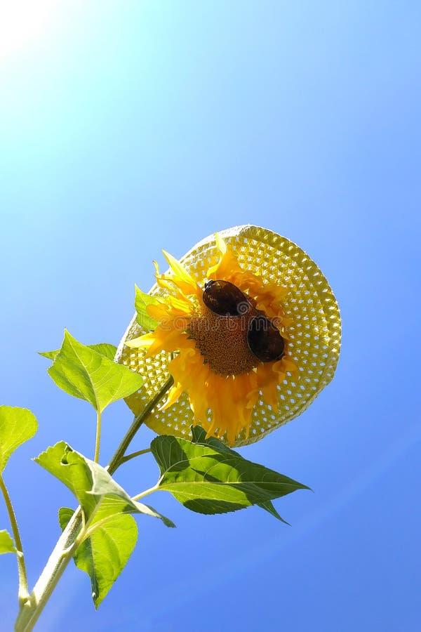Słonecznik z czarnym słomianego kapeluszu niebieskiego nieba tłem i okularami przeciwsłonecznymi zdjęcia royalty free
