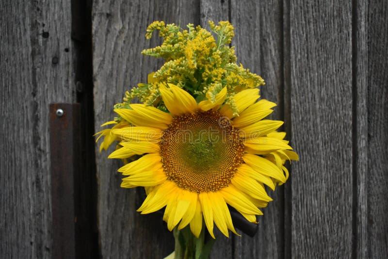 Słonecznik z kolorem żółtym kwitnie na starym drewnianym drzwi zdjęcie royalty free